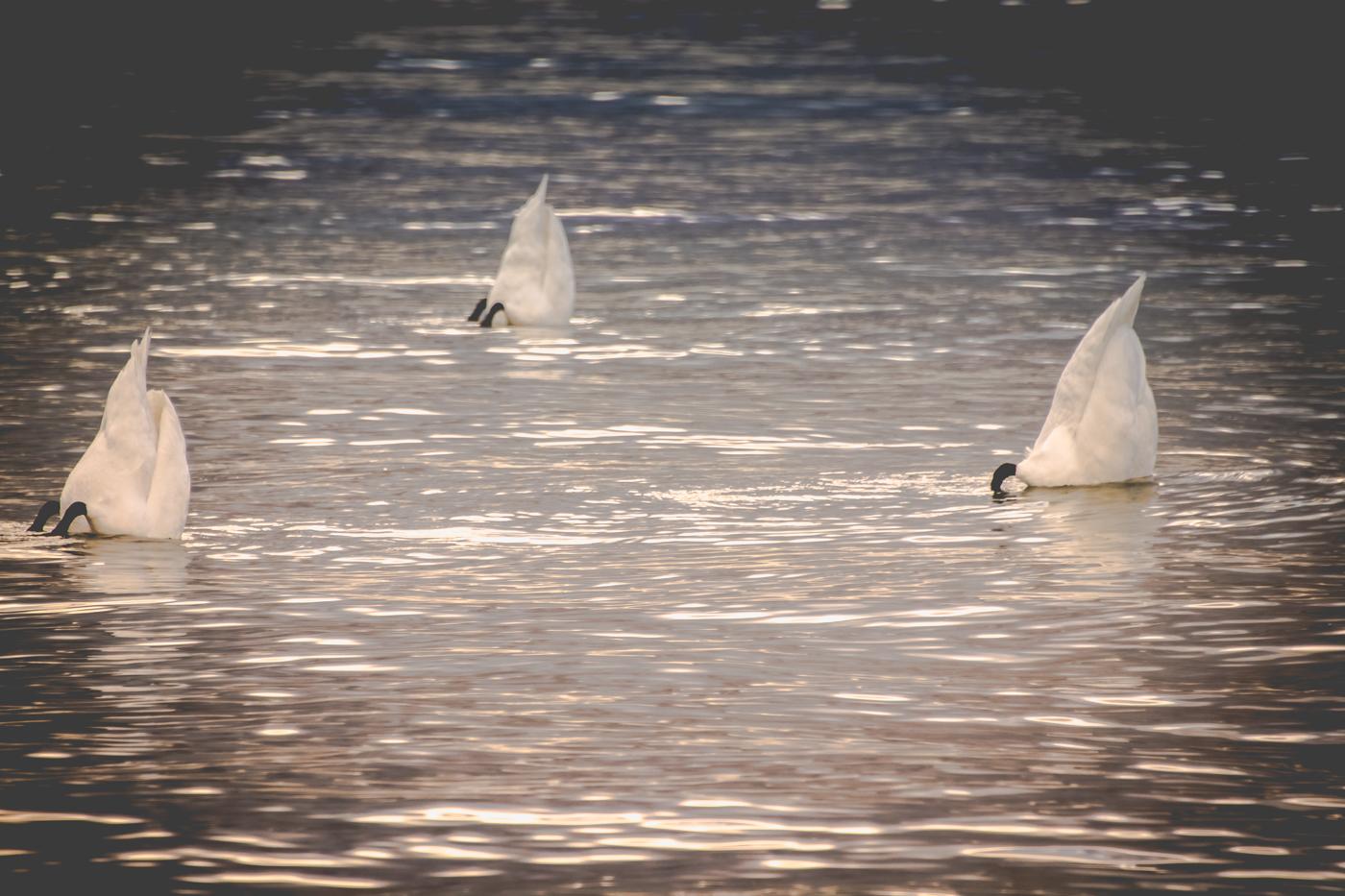 port jastarnia marina-7515