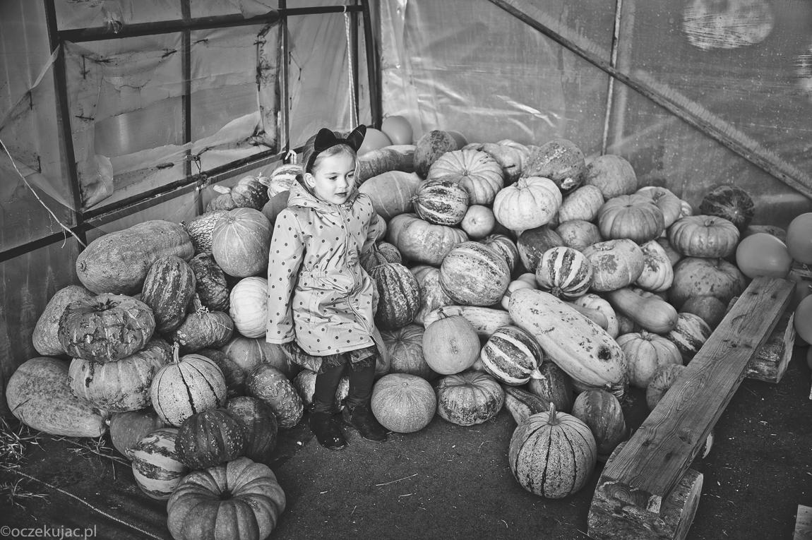 dynioland-halloween-wieliszewo-139