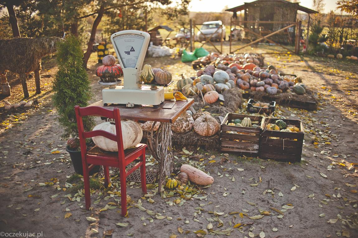 dynioland-halloween-wieliszewo-154